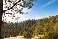 Allerta del parco nazionale della sequoia Fotografia Stock