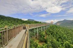 Allerta del ponte di legno della piantagione del pompelmo Immagine Stock Libera da Diritti