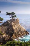Allerta del punto di Cypress, Pebble Beach Fotografia Stock