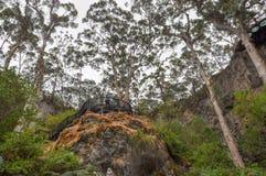 Allerta della caverna del lago: Foresta incavata Immagine Stock Libera da Diritti