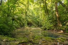 Allerta della giungla del Messico Fotografia Stock