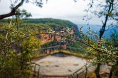Allerta della montagna in parco nazionale australiano Immagine Stock Libera da Diritti