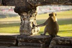 Allerta della scimmia Fotografia Stock