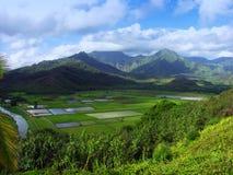 Allerta di Hanalei, Kauai Immagine Stock