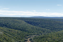 Allerta di Ndlovu - Addo Landscape Immagini Stock Libere da Diritti