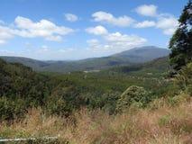 Allerta scenica della strada di Olivers della valle di Mersey, Tasmania Immagini Stock