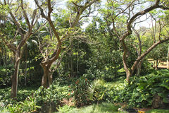 Allerton Garden Rain Forest Royalty Free Stock Image