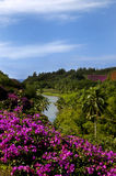 Allerton Gardens Journey to the Sea. Beautiful Allerton Gardens is paradise.  Flowers and palm trees along with river that flows into the sea Royalty Free Stock Image