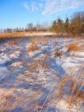 Allerton-Park-Grasland Illinois Stockfoto