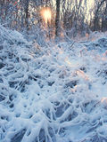 Allerton Park-Winter-Landschaft Lizenzfreie Stockbilder