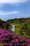Allerton tuiniert Reis aan het Overzees royalty-vrije stock afbeelding