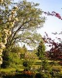 Alles is groen en de boom van de bloesemappel, bloeit bloei in de holten royalty-vrije stock foto's