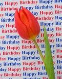 Alles Gute zum Geburtstag: eine Sondermeldung mit einer Tulpe. lizenzfreie stockfotografie