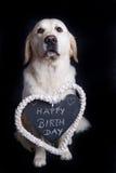 Alles Gute zum Geburtstag wünscht ein golden retriever Lizenzfreie Stockfotos