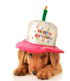 Alles- Gute zum Geburtstagwelpe Lizenzfreie Stockfotos