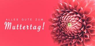 Alles Gute zum Muttertag! text i tysk: Lycklig dag för moder` s! och den rosa dahliablomman specificerar makrofotoet royaltyfri bild