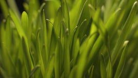 Allevamento artificiale di nuove varietà dei raccolti in laboratori, antiparassitari e preservativi video d archivio