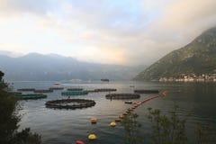 Allevamento del pesce e dei crostacei nella baia di Cattaro Fotografia Stock Libera da Diritti