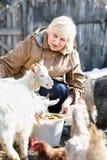 Allevamento dell'animale domestico Fotografia Stock Libera da Diritti