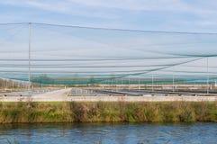 Allevamento delle imprese di piscicoltura, trota Fotografia Stock