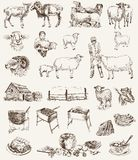 Allevamento delle pecore Fotografie Stock