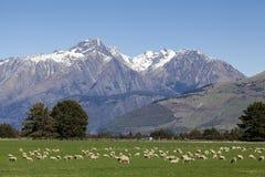 Allevamento di pecore Fotografia Stock Libera da Diritti