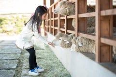 Allevamento di pecore d'alimentazione della ragazza felice in Corea del Sud Immagini Stock