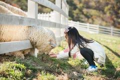 Allevamento di pecore d'alimentazione della ragazza felice in Corea del Sud Immagini Stock Libere da Diritti