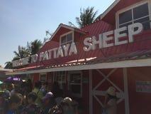 Allevamento di pecore di Pattaya Immagini Stock Libere da Diritti