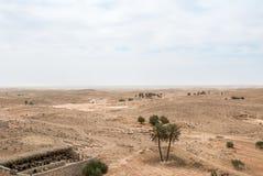 Allevamento di pecore nel deserto Fotografie Stock Libere da Diritti