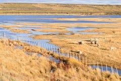 Allevamento di pecore nella Patagonia e nei laghi Fotografia Stock