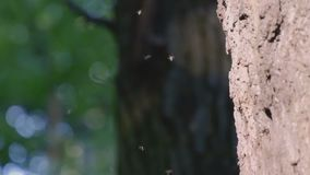 Allevamento nelle mosche degli insetti delle zanzare di sciame di primavera stock footage