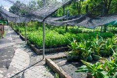 Allevamento vegetale Fotografia Stock Libera da Diritti