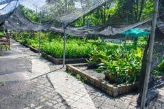 Allevamento vegetale Fotografie Stock Libere da Diritti