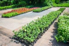 Allevamento vegetale Immagini Stock Libere da Diritti