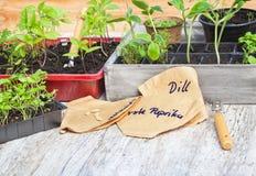 Allevamento vegetale, piantine Fotografia Stock