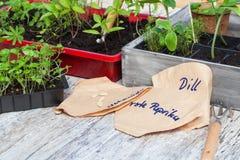 Allevamento vegetale, piantine Fotografia Stock Libera da Diritti