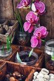 Allevamento vegetale in primavera Fotografie Stock Libere da Diritti