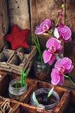 Allevamento vegetale in primavera Fotografia Stock