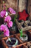Allevamento vegetale in primavera Fotografia Stock Libera da Diritti