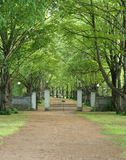 Alley. Gates in the park Stock Images
