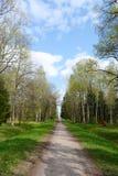 Alley in Alexandrovsky Park in Tsarskoe Selo. Royalty Free Stock Image