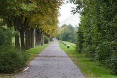 Alley along the river Danube. Alley with horse chestnut trees along the river danube in autumn at Tulln, Austria stock image