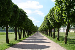 Alley At The Museum-estate Kuskovo. Royalty Free Stock Image