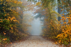 Alley in Autumn Stock Photography