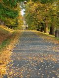 Alley on autumn Royalty Free Stock Image