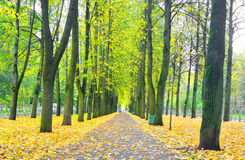 Alley in autumn. Royalty Free Stock Photos