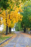 Alley in autumn park Royalty Free Stock Photo