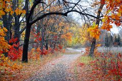 Alley at the autumn park Stock Photos