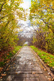 Alley in autumn park Royalty Free Stock Image